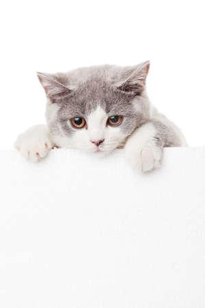 Leuk katje met leeg aanplakbord Stockfoto