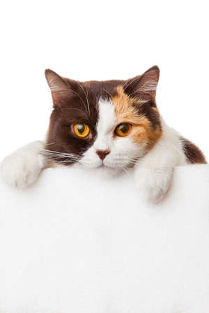 Cute kitten with blank billboard Stock Photo
