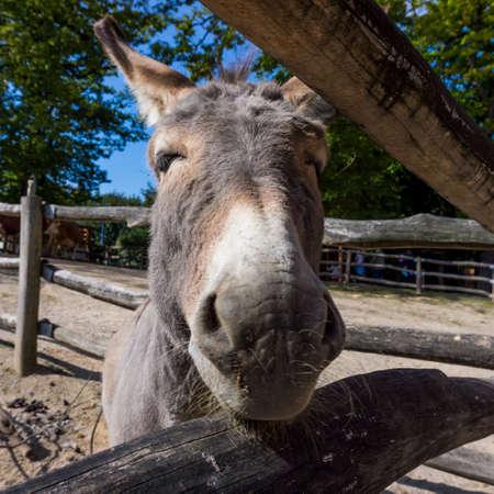 head of a small donkey