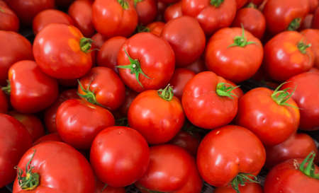 Groep van tomaten