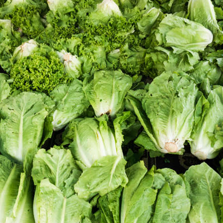 flowering kale: green vegetables in market. Green cabbage and lettuce Stock Photo