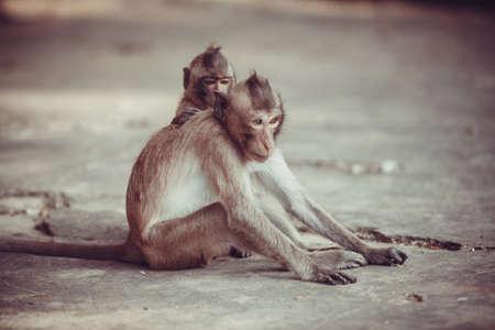 crafty: Monkey portrait