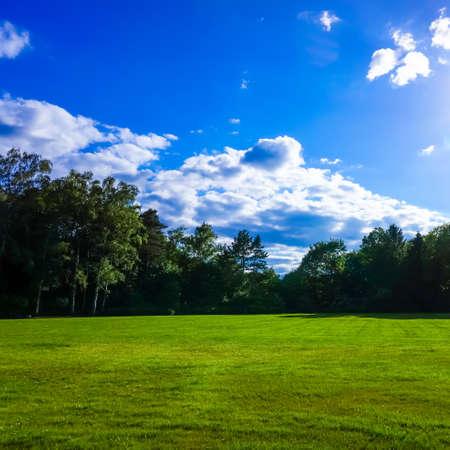 champ vert: green field