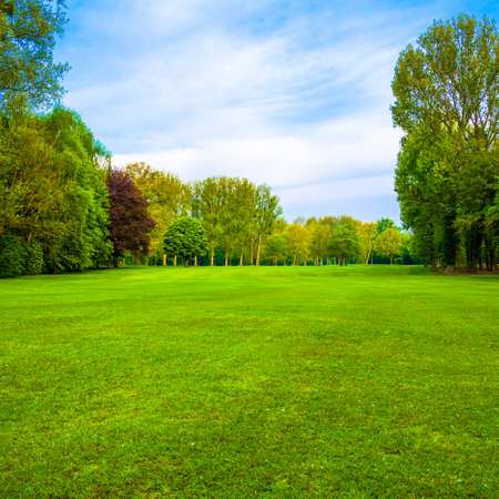 meadows: green field. Beautiful Landscape. grass and forest Stock Photo