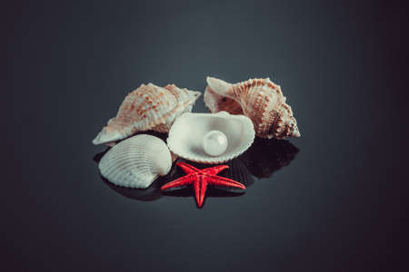 perl: pearl on the seashell.  seashell with pearl on black background