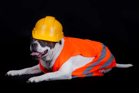 under construction sign: dog under construction. Under construction concept. Stock Photo