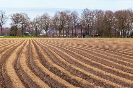 asparagus field.
