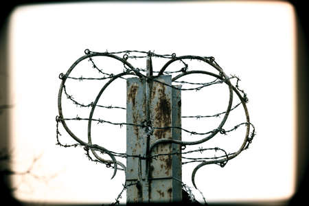 barbed wire isolated: barbed wire isolated
