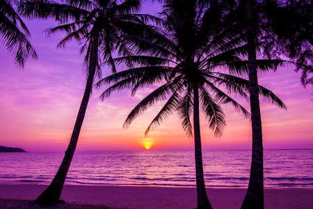 Palmbomen silhouet bij zonsondergang Stockfoto