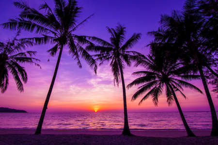 purple sunset: Palm trees silhouette at sunset
