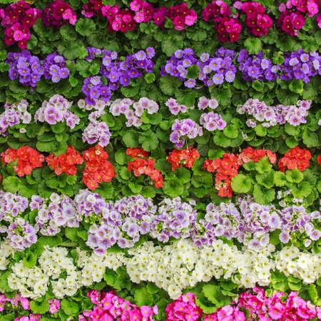 julian: Spring flower.  flower background