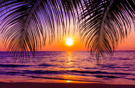Beautiful sunset.  Sunset over the ocean with tropical palm trees.  Paradise beach