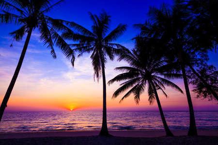 bounty: Hermoso atardecer. Puesta de sol sobre el océano con palmeras tropicales. Playa Paraíso