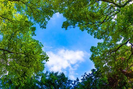 Mooie bomen op hemel achtergrond. natuur groene bladeren. Bomen takken op de blauwe hemel