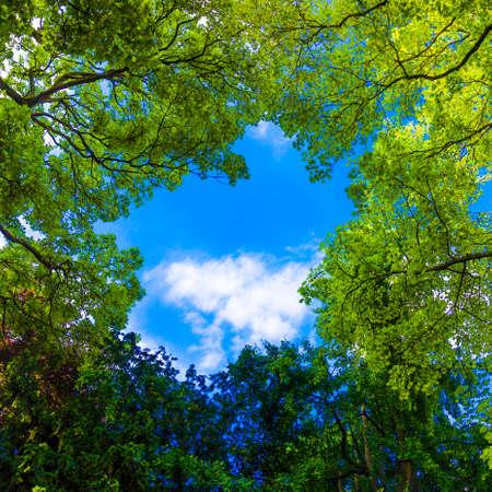 Beaux arbres sur fond de ciel.