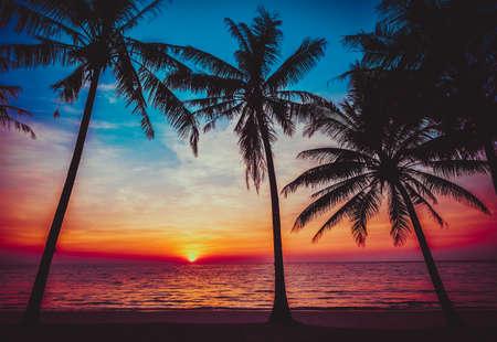 tropical fruit: sunset tropical beach.   Stock Photo
