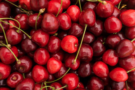 cereza: Cerezas rojas. Selecci�n de la cereza. bayas maduras las cerezas Foto de archivo