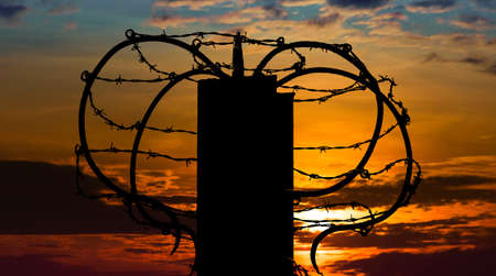 barb wire: Barbed wire on sunset sky background.