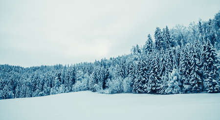 winter landscape. Trees Covered with Snow Stock Photo