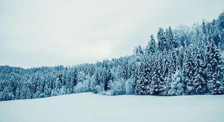 winterlandschap. Bomen bedekt met sneeuw
