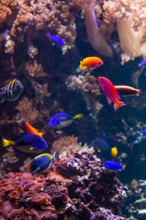 underwater fish: underwater background.  Underwater photo Stock Photo