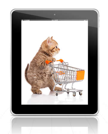 osolated: british cat with shopping cart isolated on white. kitten osolated