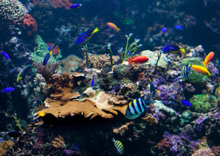 underwater fishes: underwater background.  Underwater photo Stock Photo
