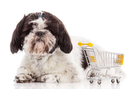sale shop: dog with shopping cart isolated on white