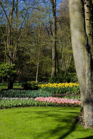 blosom: Keukenhof garden, Netherlands