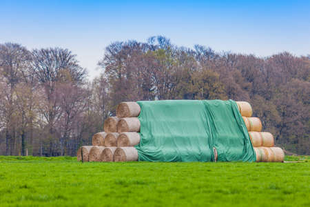 hayroll: hay-roll on meadow. Hay bales on the field