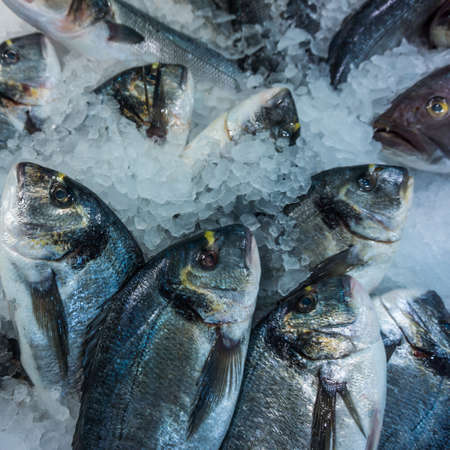 gilthead: dorado fish on ice.  Seafood  at the fish market