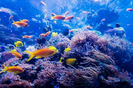 firefish: beautiful underwater world