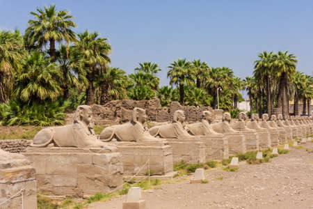 past civilization: sphinxes forming part of Luxor temple in Egypt Stock Photo