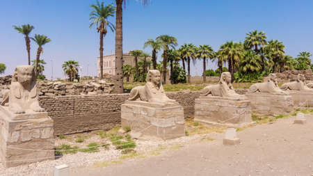avenue: Avenue of the Sphinxes, Egypt