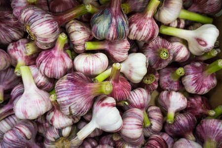 spiciness: Fresh Garlic.  Garlic pile for background