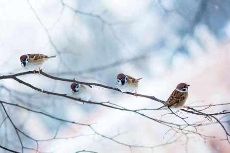 bird feeders. tree house for the birds.  Bird feeder in winter park.