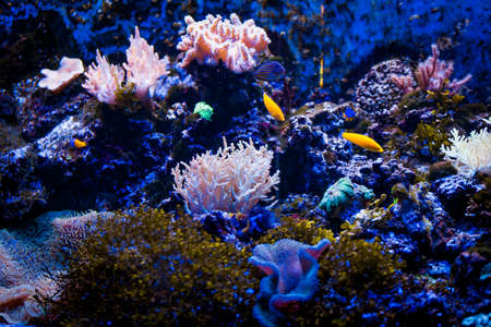 Tropical sea underwater with coral reefs and fish. beautiful view of sea life