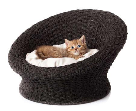 little kitten on white background.  striped kitten