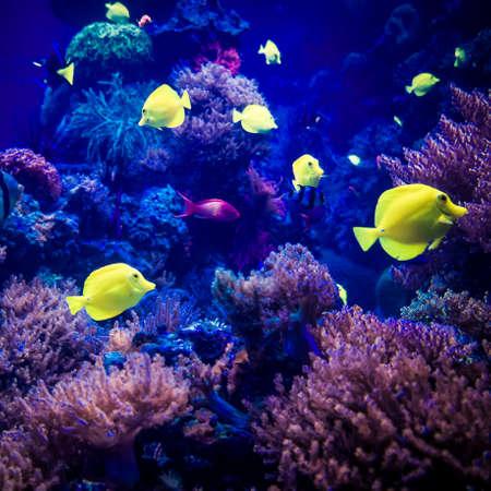beautiful underwater world. underwater world
