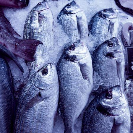 the dorada: Fresh seafood. Fresh fish in the market. fresh dorada fish