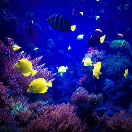 firefish: beautiful underwater world. underwater world