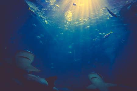 Shark Underwater Photo. Sharks in underwater with sunrays Stock Photo