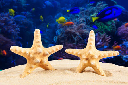 star fish: Summer vacation. Travel concept background Stock Photo