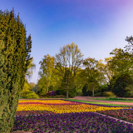 empedrado: Nice park in the city with trees, Spring flowers and grass