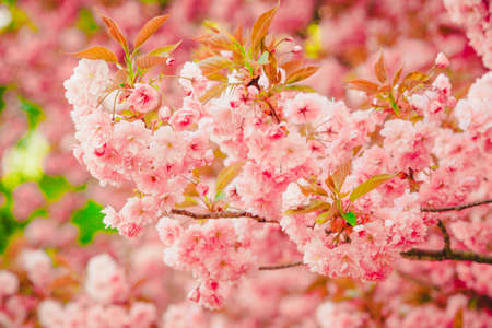 botanics: Spring Background. Blossom tree .Spring flowers