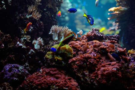underwater background. Underwater scene. Underwater world. Underwater life landscape Stock Photo