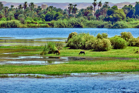 River Nile in Egypt. beautiful  landscape 스톡 콘텐츠