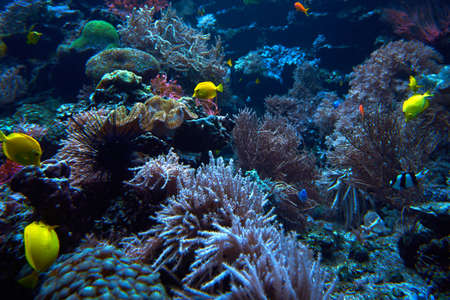 underwater coral reef landscape. Coral garden with tropical fish