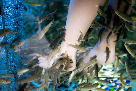 Fish spa feet pedicure. Fish Spa Skin Therapy Stock Photo