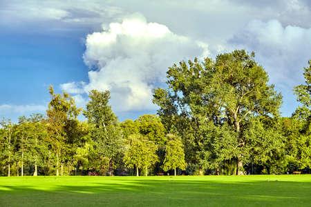 Green landscape. the green nature. nature landscape